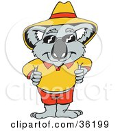 Koala In Orange And Red Clothes Shades And A Hat