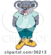 Male Koala Wearing Clothes And Shoes