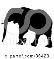 Clipart Illustration Of A Tusked Black Silhouetted Adult Elephant Walking Left