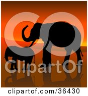 Clipart Illustration Of A Black Silhouetted Adult And Baby Elephant In Profile Walking Against An African Sunset