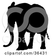 Clipart Illustration Of A Black Silhouetted Adult Elephant With One Ear Lifted