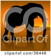 Clipart Illustration Of A Black Silhouetted Adult Elephant In Profile Walking Against An African Sunset
