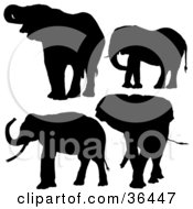 Clipart Illustration Of Four Silhouetted Elephants In Black