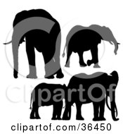Clipart Illustration Of Black Silhouetted Elephants by dero