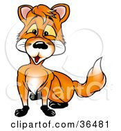 Clipart Illustration Of A Cute Orange Fox With Yellow Eyes Looking Outward by dero