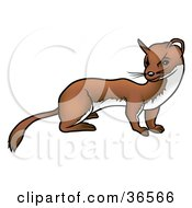 Clipart Illustration Of A Curious Ferret by dero