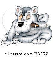 Sitting Polar Bear Eating An Ice Pop