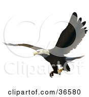 Clipart Illustration Of A Bald Eagle Flying With His Talons Ready To Grab Prey