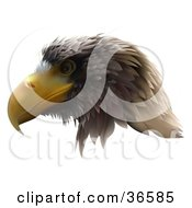 Clipart Illustration Of A Golden Eagle Head In Profile Facing Left by dero