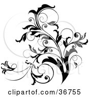 Clipart Illustration Of A Black And White Curly Plant Flourish Design Accent