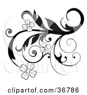 Elegant Black And White Scroll Design Element With Blooming Flowers And Curly Tendrils