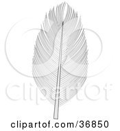 Clipart Illustration Of A Single Bird Feather