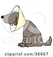 Clipart Illustration Of A Brown Dog Wearing An Elizabethan Collar While Recovering