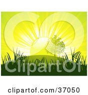 Clipart Illustration Of Bright Light Of The Sun Silhouetted Grasses And Trees While Setting Behind A Hill In A Yellow Sky