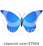 Clipart Illustration Of A Beautiful Blue Butterfly With A Black Body
