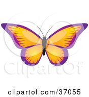 Clipart Illustration Of A Beautiful Butterfly With Orange Wings Trimmed In Purple by elaineitalia