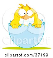 Clipart Illustration Of A Yellow Chick With A Big Toothy Grin Peeking Out Of An Egg Shell