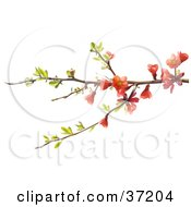 Clipart Illustration Of A Tree Branch With Leaves And Red Blossoms