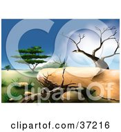 Clipart Illustration Of An African Landscape With Two Dead Trees And A Green Acacia Tree In The Background