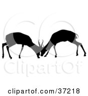 Clipart Illustration Of A Black Silhouette Of Two Young Antelope In Battle