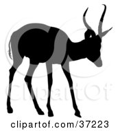 Clipart Illustration Of A Black Silhouette Of A Young Antelope