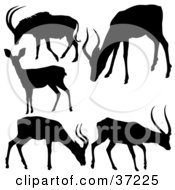 Clipart Illustration Of Antelope Silhouettes In Black On A White Background