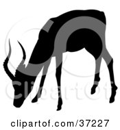 Black Silhouette Of A Grazing Antelope