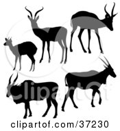 Clipart Illustration Of Five Antelope Silhouetted In Black
