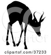 Clipart Illustration Of A Black Silhouette Of A Cautious Young Antelope