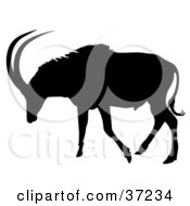 Black Silhouette Of An Antelope About To Graze
