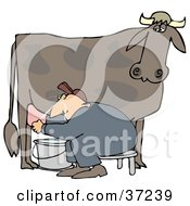 Man Sitting On A Bench And Getting Squirt In The Face While Milking A Cow