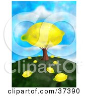 Giant Lemon On A Tree With Fallen Fruit On The Ground On Top Of A Hill Against A Sky