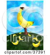 Clipart Illustration Of A Giant Banana On A Tree With Fallen Fruit On The Ground On Top Of A Hill Against A Sky by Prawny