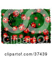 Clipart Illustration Of A Background Of Red Ladybugs On Green by Prawny