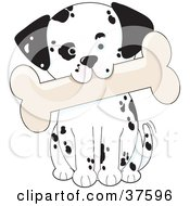 Clipart Illustration Of A Cute Dalmatian Puppy Dog Tilting His Head And Biting A Bone