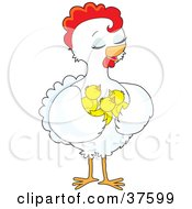 Clipart Illustration Of A Pretty White Hen Holding Her Chicks In Her Wings
