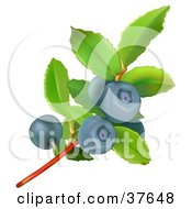 Clipart Illustration Of A Blueberry Plant With Green Leaves And Ripe Berries
