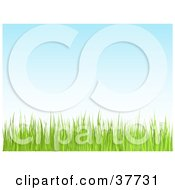 Clipart Illustration Of A Green Lawn Grass Growing Against A Blue Sky