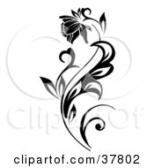 Poster, Art Print Of Beautiful Bloom On A Black Plant
