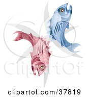 Clipart Illustration Of Pink And Blue Pisces Fish With The Zodiac Symbol