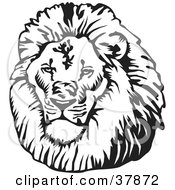 Clipart Illustration Of A Black And White Male Lion Head by David Rey #COLLC37872-0052