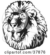 Clipart Illustration Of A Black And White Roaring Male Lion Head by David Rey #COLLC37876-0052