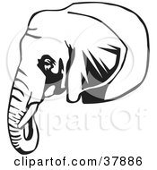 Black And White Outline Of A Tusked Elephant Head by David Rey