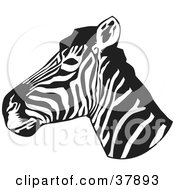 Black And White Zebra Head In Profile by David Rey
