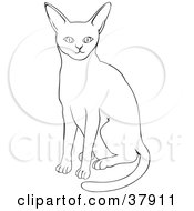 Black And White Outline Of An Abyssinian Cat by David Rey