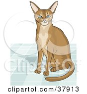 Curious Abyssinian Cat Seated On A Tile Floor by David Rey