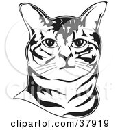Black And White Outline Of An American Bobtail Cats Face by David Rey