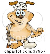 Beat Up Brown Dog Wearing A Cast And Head Bandage Walking With A Crutch