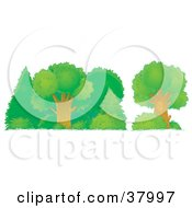 Clipart Illustration Of Healthy Green Trees Shrubs And Bushes In A Forest by Alex Bannykh