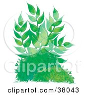 Clipart Illustration Of A Tall Leafy Plant Growing Behind Bushes